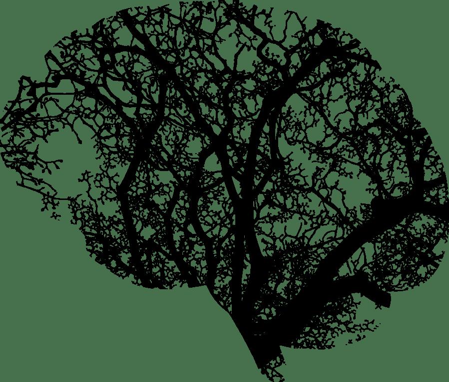 kognitio, kognitio psykologia, metakognitio, aivot, tarkkaavaisuus, muisti, tiedonkasittely